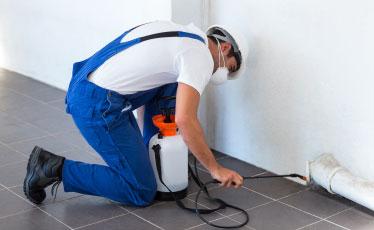 Pest Cleaning Brisbane